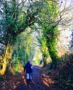 Dog Walk, Cleeve Lane.